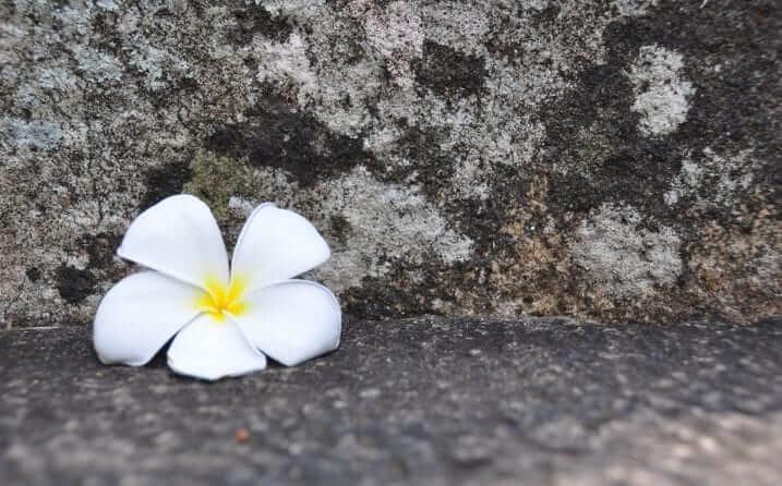 MIhintale Diario de viaje Sri Lanka